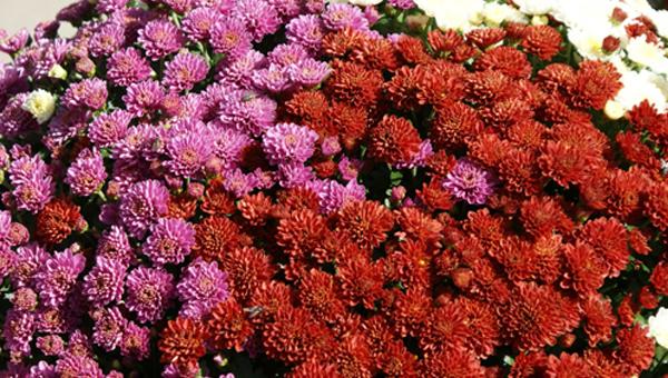 Flors i rams per tots sants