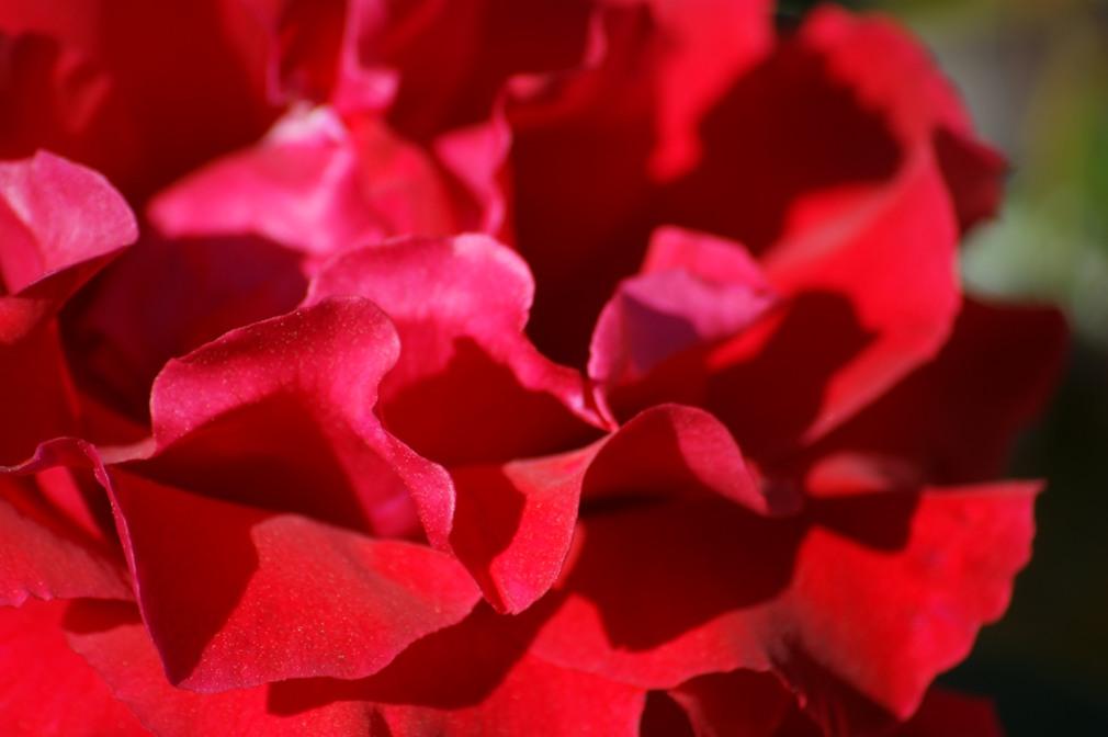 Sant Jordi a Uniplant